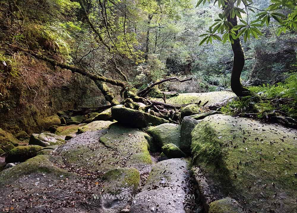 How to visit Yakushima without a guide Day 2 – Shiratani Unsuikyo Ravine hike