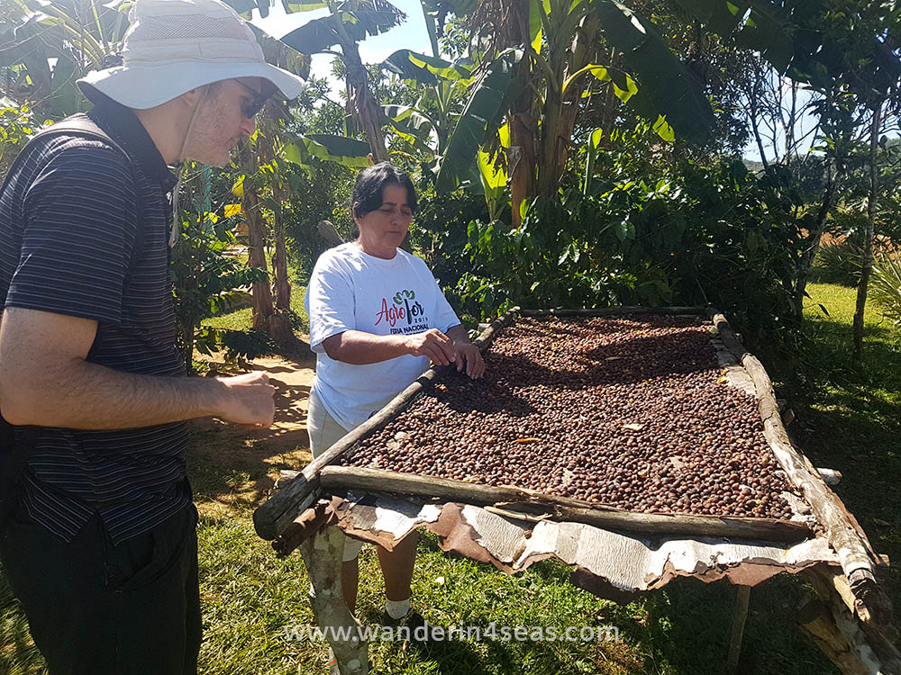 In a coffee farm on the horse riding tour