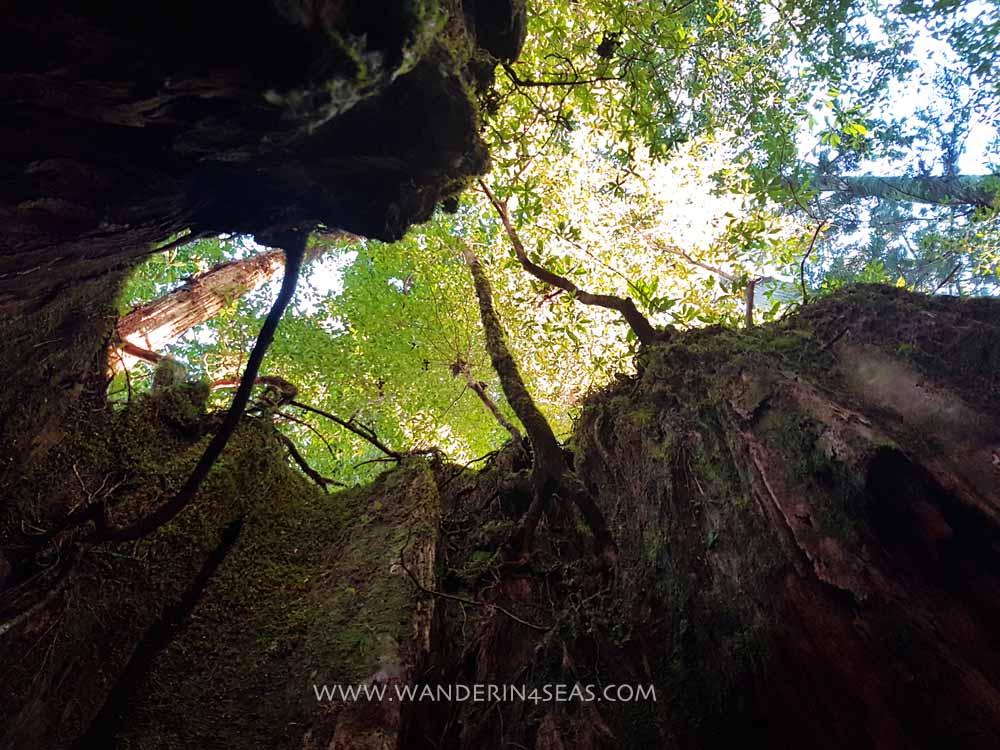 How to visit Yakushima without a guide Day 1- Yakusugi Land